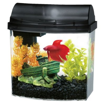 Fish Tanks for Kids and Adults