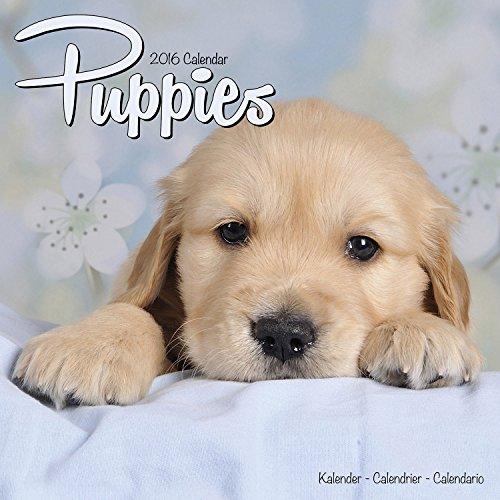 Calendars for Dog Lovers